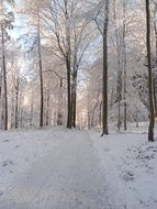 snowy road in the winter forest on a sunny day