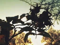 silhouette of a plant branch