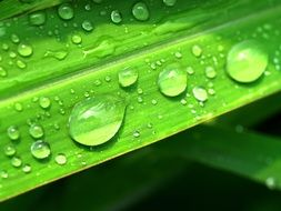 fresh Water Drops on bright green leaf plant