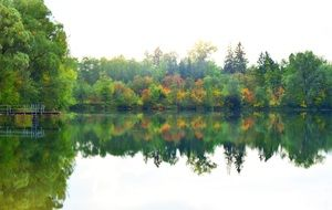 various trees are reflected in the lake