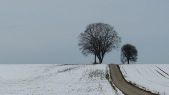 Winter road Tree Snow landscape