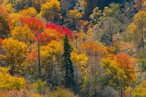panorama of a mountain forest in autumn colors