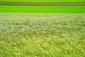 Landscape of green grass field