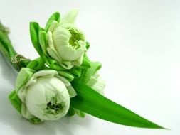 White Flower Lotus in green leaves Decoration