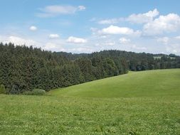 panoramic view of a green meadow on a sunny day