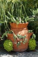 Beautiful green plants in the brown pot in spring