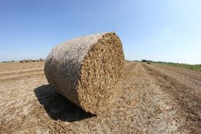 big bale of straw in the field on a sunny day