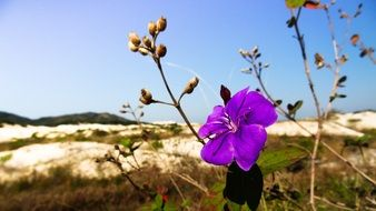 colorful flower among sand dunes