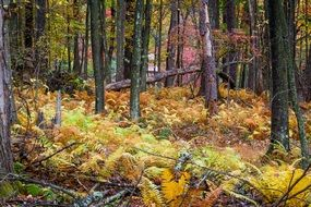 photo of autumn forest cover