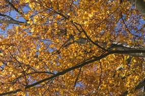 golden autumn in the leaves of a tree