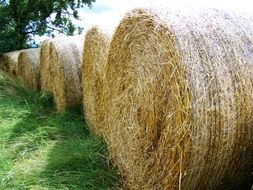unmatched Straw Bales
