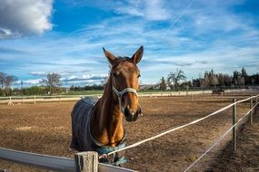 horse in a wooden paddock on a farm