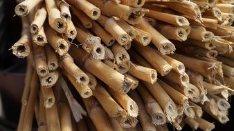 bunch of dry bamboo