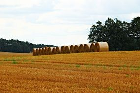 bales of straw on stubble in summer