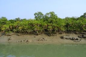 panoramic view of mangroves in india