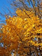 yellow tree foliage in autumn
