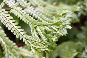 beautiful Green Fern Leaves close up