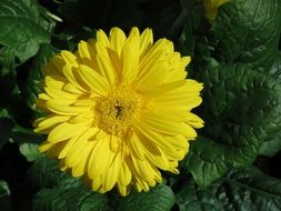 marvelous Yellow Flower