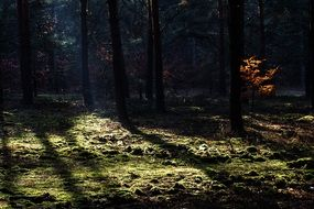the sun\'s rays in the dense forest