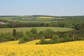 panoramic view of a rape field on a sunny day
