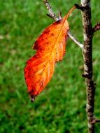 colorful autumn leaf on a small tree