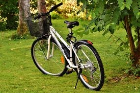bike with a black basket in the park