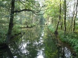 river channel in the biosphere reserve in spreewald