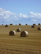 Straw Bales on harvested field under blue sky