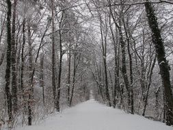 Winter Forest Snow path view