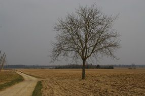 lonely tree on the field near the road