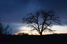 evening silhouette of a tree without foliage