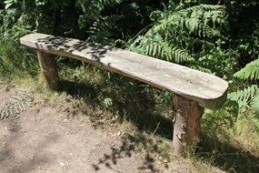 wooden bench on the edge of a path in the forest