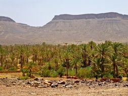 Palm Grove at mountains, Morocco