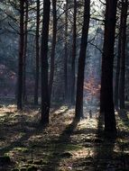 dark autumn forest in sunshine
