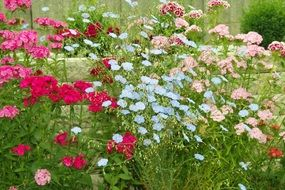 variety of colorful garden flowers