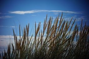 Reeds on a beach