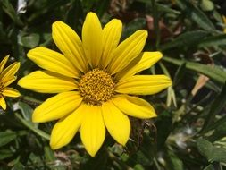 Yellow Flower blossom plant