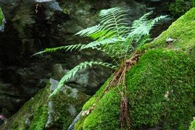 young fern on a green stone