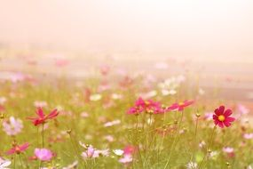 meadow in colorful flowers in the fog