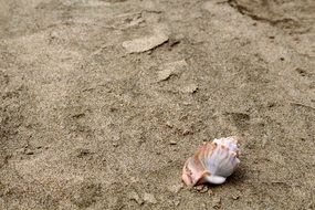 shell on ninety mile beach in New Zealand