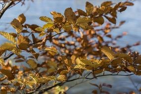 tree leaves in the late autumn