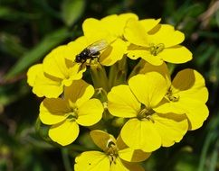 a fly sits on a yellow flower