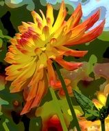 yellow orange Dahlia Blossom Flower