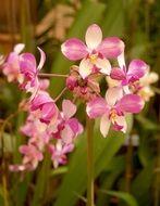 purple decorative orchid flower