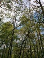 green spring forest trees view