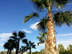 Palm Tree Sky tropical Landscape