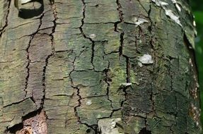 cracked tree bark close-up