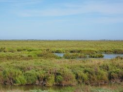 camargue nature park in France