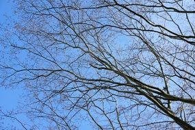 bare Tree Branches at blue Sky