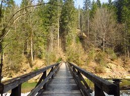 wooden bridge over the river near the forest